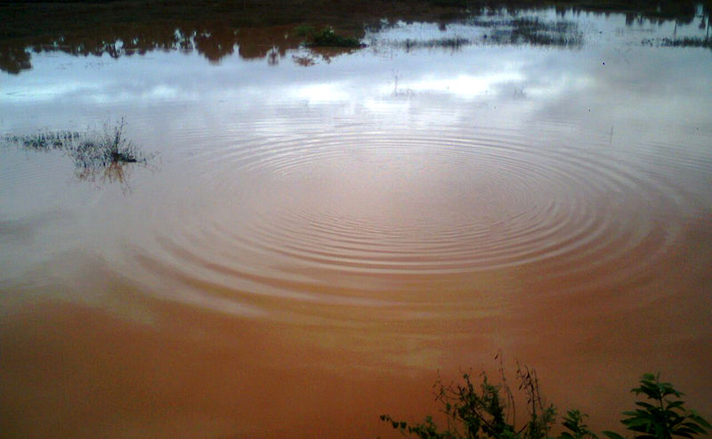 File:Ripples in a Pond at Padmanabham.jpg