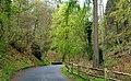 Road, Crawfordsburn Country Park - geograph.org.uk - 784960.jpg