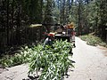 Road side brushing project on the Sierra National Forest (3935507602).jpg