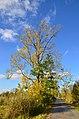 Robenhauser Riet 2012-10-13 17-13-51.JPG