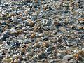 Rocks shells and pebbles on the beach.jpg