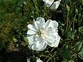 Rosa Francine Austin 2019-06-04 5809.jpg
