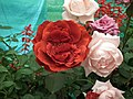 Rose from Lalbagh flower show Aug 2013 8545.JPG