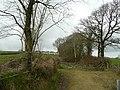 Row of trees near Tamerton Town - geograph.org.uk - 715894.jpg