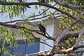 SAN BIRDS 06.jpg