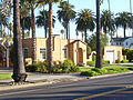 San Jose California Palm Trees Lined Up.jpg
