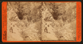 San Pascual Canon, San Gabriel Mountians, Cal, by Taber, I. W. (Isaiah West), 1830-1912.png
