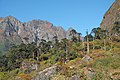 Sankhuwasabha, Nepal - panoramio (7).jpg