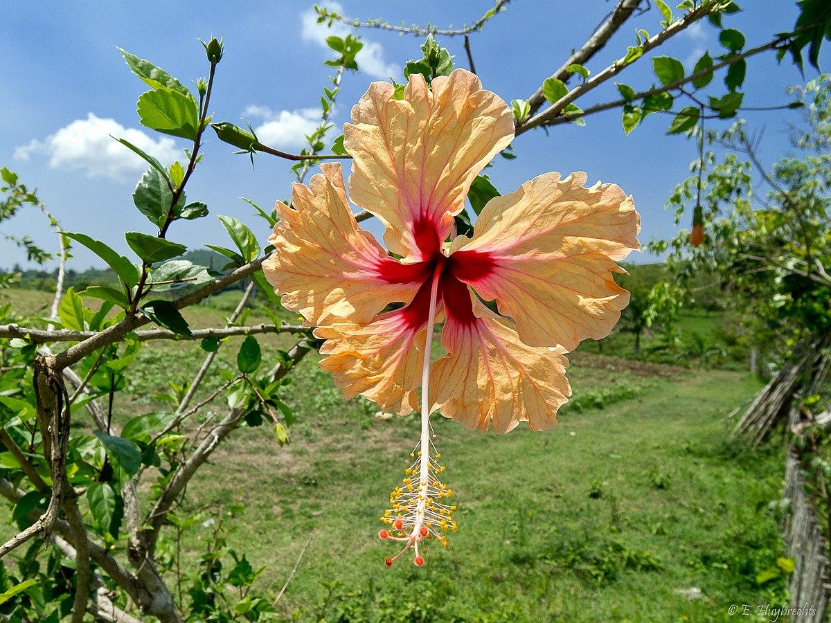 Jard n bot nico de matanzas wikipedia la enciclopedia libre for Informacion sobre el jardin botanico