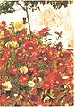 Schiele - Blumenfeld.jpg