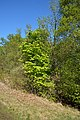 Schleswig-Holstein, Fockbek, Naturschutzgebiet Fockbeker Moor NIK 1720.jpg