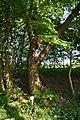 Schleswig-Holstein, Nordhastedt, Landschaftsschutzgebiet Mühlenteich NIK 2475.jpg