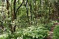 Schleswig-Holstein, Windbergen, Landschaftsschutzgebiet Wodansberg NIK 6734.JPG