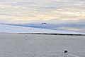 Schmidt-Insel 2 2014-09-01.jpg