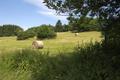 Schotten Rudingshain NR 162284 Auf der langen Galle Haymaking.png