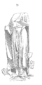 Sculpture.medecin.cathedrale.Chartres.png