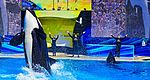 Sea World San Diego (26252960716).jpg