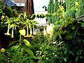 Septembergarten - panoramio.jpg