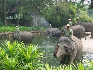 Singapore Zoo - Elephant show