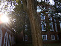 Shannon Garden and Rotunda UVa morning sun.jpg