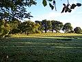 Sheep Pasture near Downer's Vineyard. - geograph.org.uk - 60493.jpg