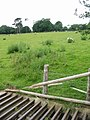 Sheep grid in Acrise Park - geograph.org.uk - 864280.jpg