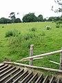 Sheep grid in Acrise Park - geograph.org.uk - 864280.jpg