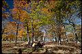 Shenandoah National Park SHEN3861.jpg