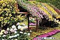 Shilin Official Residence Chrysanthemum Exhibition 士林官邸菊展 - panoramio (1).jpg
