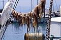 Sick squid the lot (84467362).jpg