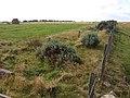 Silage-making and sheep on Todridge Fell - geograph.org.uk - 553490.jpg