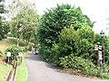 Singapore Botanic Gardens, Evolution Garden, Sep 06.JPG