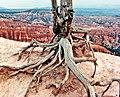 Skeleton, Bryce Canyon, UT 9-09 (15398142979).jpg