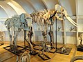 Skeletons - Kunming Natural History Museum of Zoology - DSC02370.JPG