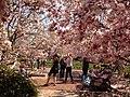 Smithsonian Gardens in April (17614993811).jpg