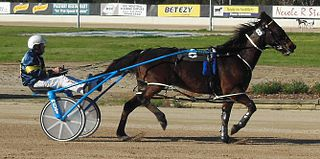 Smoken Up Australian champion Standardbred race horse bred in New Zealand