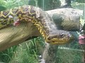 Snakes in Zoo Negara Malaysia (22).jpg