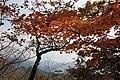 Sobaeksan National Park, South Korea, tree.jpg