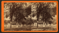 South Broad Street, Savannah, Ga, from Robert N. Dennis collection of stereoscopic views 8.png