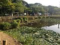 South moat in southwest side of site of Fukuoka Castle 4.JPG