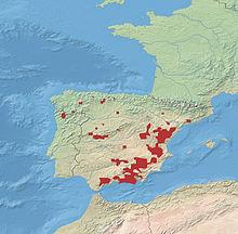 Ibex Goat Iberian ibex - Wikiped...