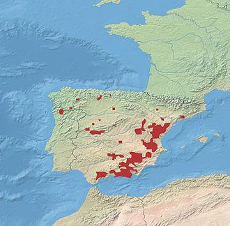 Spanish ibex - Image: Spanish Ibex