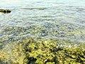 Species in Delft sea.jpg