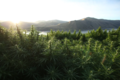 Spectrum-hemp-farm-huntington-oregon-0040.png