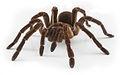 Spider17.jpg