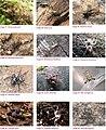Spiders of Chinnar Wildlife Sanctuary 06.jpg