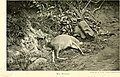Sport on the Nilgiris and in Wynaad (1911) (14595805799).jpg