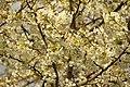 Spring in London (7119672265).jpg