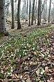 Spring snowflakes on the Vuache - panoramio.jpg