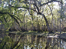 The river is smooth as glass and lined by oak and other mixed forest trees, drooping over and reflected in the water; its width is approximately a dozen yards (11 m).